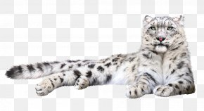 Animal Prints In Snow - Felidae Snow Leopard Tiger Clip Art PNG