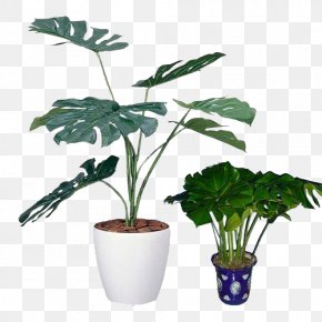 Small Potted Plants - Swiss Cheese Plant Light Houseplant Photocatalysis PNG