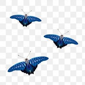 Vector Blue Butterfly - Butterfly Blue Euclidean Vector PNG