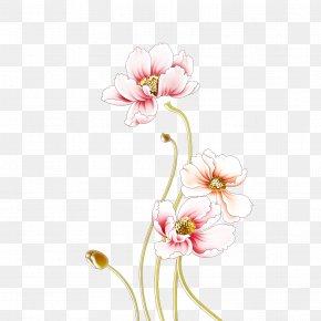 Peony - Moutan Peony Wall Flower PNG