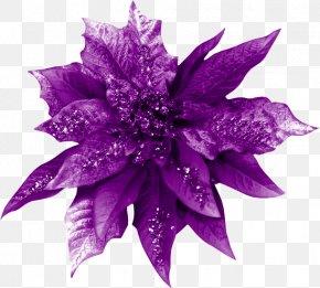 Violet - Violet Cut Flowers Color PNG