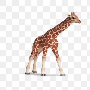 Giraffe - Giraffe Schleich Toy Amazon.com Calf PNG