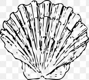 Shell Outline - Seashell Clam Blue Clip Art PNG