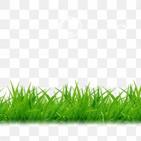 Grass - Tea A PNG