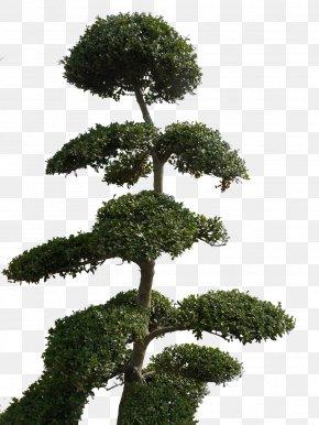 Tree Plan - DeviantArt Computer Software Tree PNG