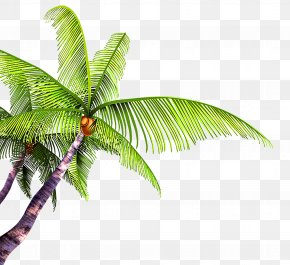 Great Fresh Coconut - Summer Poster Beach PNG