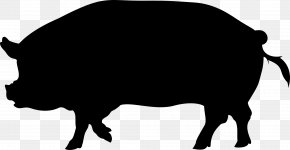 Wild Boar Clip Art Vector Graphics Drawing Stock Illustration PNG