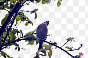 Vector Birds Tree - Bird Tree Euclidean Vector PNG