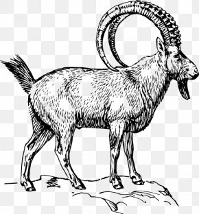 Goat - Alpine Ibex Goat Drawing Coloring Book Clip Art PNG
