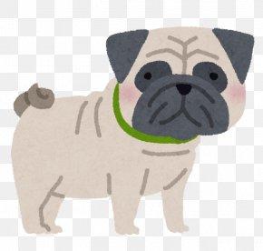 Dog Pug - Pug Puppy Dog Breed Companion Dog Toy Dog PNG