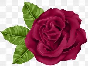 Rose Clip Art Image - Garden Roses Centifolia Roses Clip Art PNG