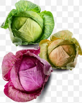 All Kinds Of Cabbage Material - Savoy Cabbage Cauliflower Brussels Sprout Vegetable PNG