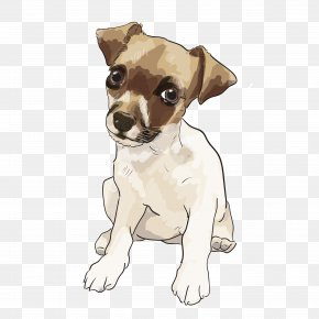 Puppy - Dog Breed Jack Russell Terrier Toy Fox Terrier Miniature Fox Terrier Rat Terrier PNG