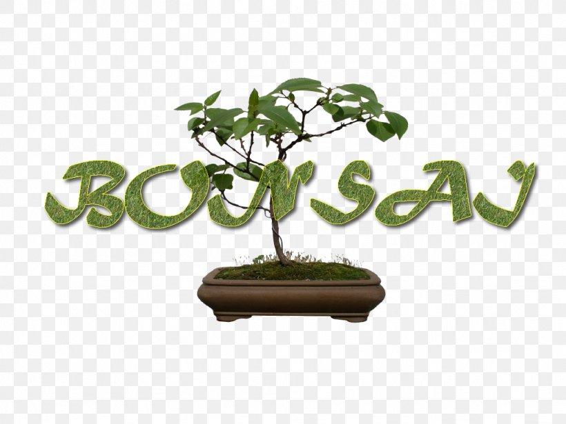 Sageretia Theezans Flowerpot Bonsai Tree The Karate Kid Png 1024x768px Sageretia Theezans Actividad Bigcommerce Bonsai Doubt