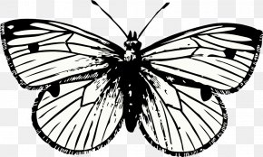 Cabbage Clip Art - Butterfly Tattoo Drawing Clip Art PNG