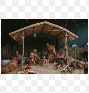 Christmas - Nativity Scene Christmas Gospel Of Luke Nativity Of Jesus Gift PNG