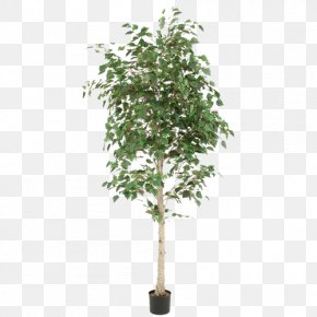 Green Tree Potted Foliage Plants - Weeping Fig Paper Birch Flowerpot Houseplant Tree PNG