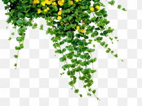 Plants Free Download - Bangladesh Bengali New Year (Pxf4hela Boishakh) PNG