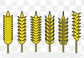 Vector Wheat - Euclidean Vector Download PNG