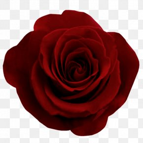 Red Rose Image, Free Picture Download - Rose Flower Ornament Motif PNG