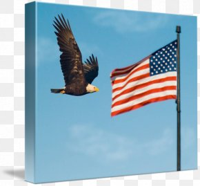 Eagle Flag - Bald Eagle Flag Of The United States Court PNG