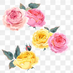 Rose,Pink Roses,Yellow Rose - Beach Rose Pink Yellow Computer File PNG