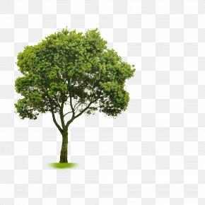 Shading - Choosing Small Trees Clip Art PNG