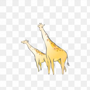 Giraffe Cartoon - Northern Giraffe Cartoon Drawing PNG