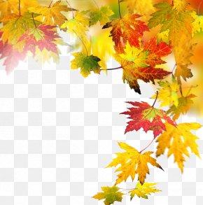 Autumn Elements - Autumn Leaf Computer File PNG