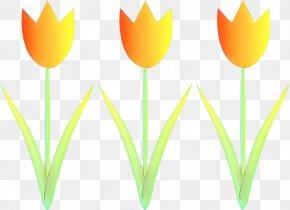 Tulip Clip Art Plant Stem Desktop Wallpaper Leaf PNG