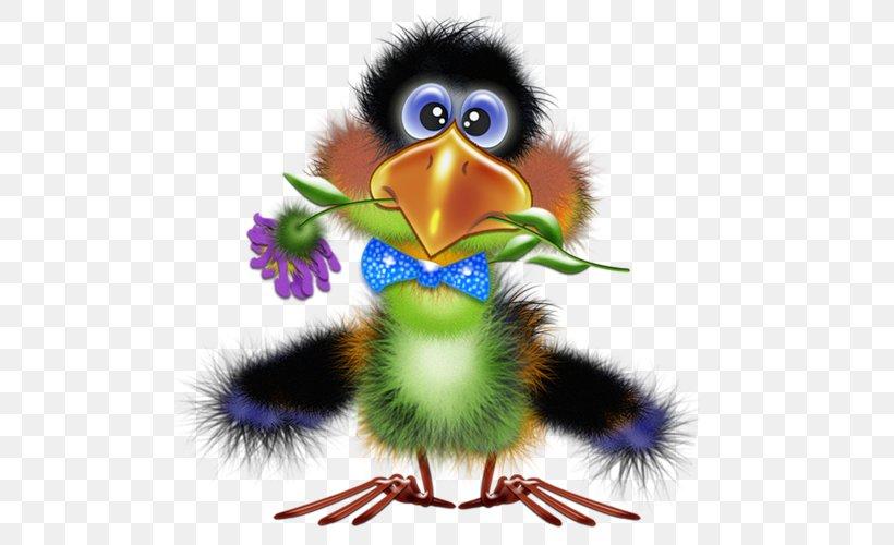 Bird Illustrations Drawing Funny Animal Clip Art Png