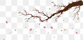 Falling Petals Of Peach Blossoms - Cherry Blossom Peach Petal PNG