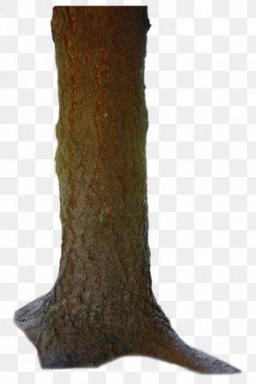 El - Trunk Torso Tree Human Body PNG