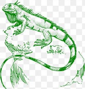 Cartoon Iguana Pictures - Lizard Green Iguana Reptile Chameleons Tattoo PNG
