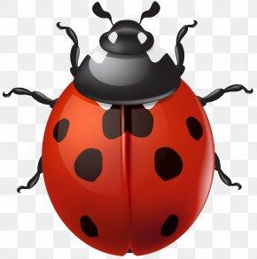 Ladybird Clip Art - Ladybird Clip Art PNG