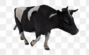 Cow Image - Cattle Livestock Sticker PNG