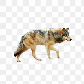 Wolf - Dog Coyote Mexican Wolf Tundra Wolf Red Wolf PNG