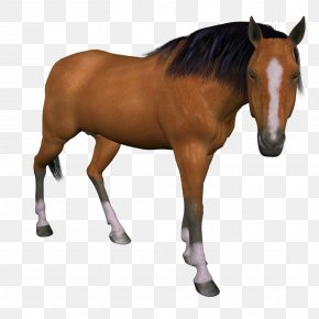 Horse - Horse Animal Ve PNG