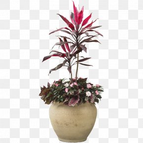 Indoor Plant Potted Plants - Houseplant Flowerpot PNG