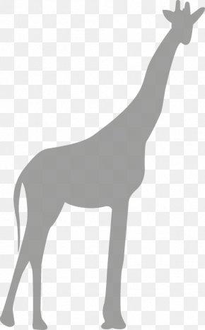 Giraffe - Northern Giraffe Gratis Download Computer File PNG