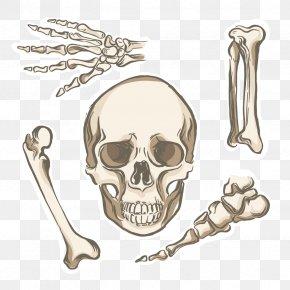 Vector Skull Skeleton - Bone Human Skeleton Human Body Human Anatomy PNG