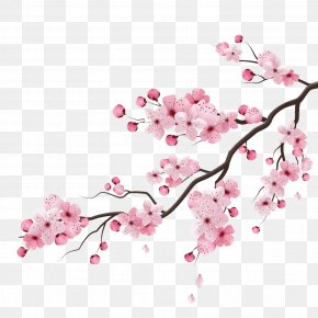 Cherry Blossom Peach - Cherry Blossom Vector Graphics Drawing Illustration PNG