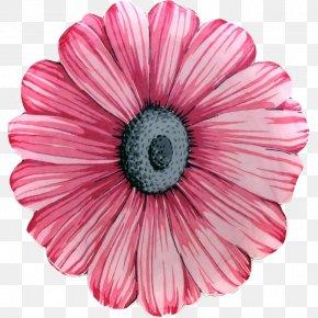 Pink Flower Calendar - Flower Pink Petal Common Daisy PNG