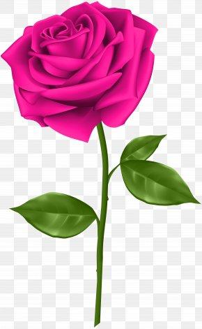 Pink Rose Transparent Clip Art - Blue Rose Clip Art PNG