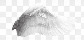 Angel Wings - Wing Download Bird PNG