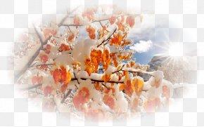 November Month December 0 Lunar Calendar PNG