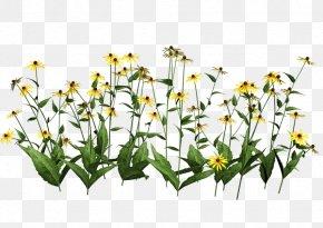 Plant - Houseplant Clip Art PNG