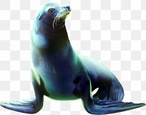 Sea Lion Animals - Sea Lion Earless Seal Animal Clip Art PNG
