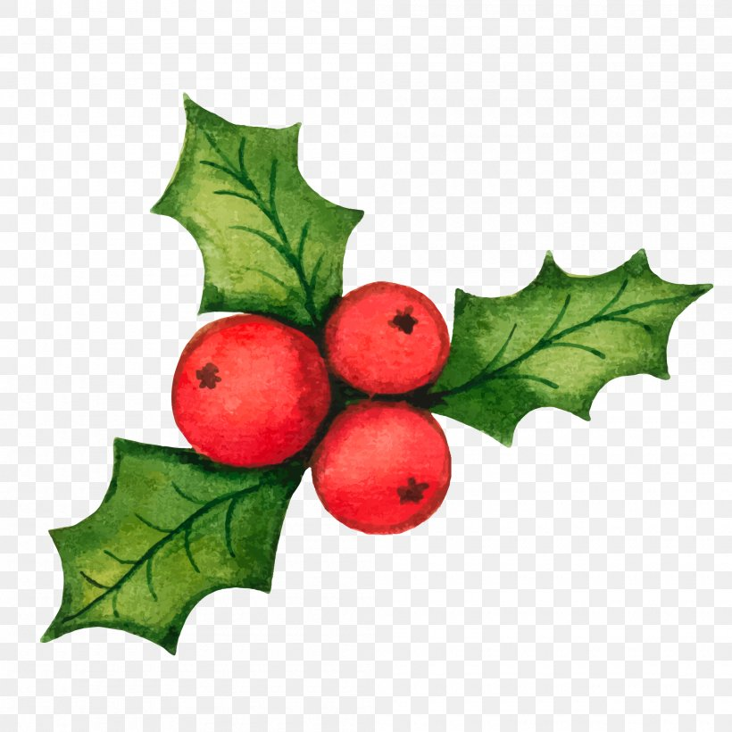 Common Holly Christmas Decoration Clip Art, PNG, 2000x2000px, Common Holly, Aquifoliaceae, Aquifoliales, Christmas, Christmas Decoration Download Free