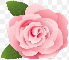 Rose Transparent Clip Art Image - Garden Roses Centifolia Roses Clip Art PNG